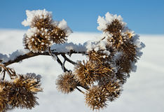 Winter background. Royalty Free Stock Photography