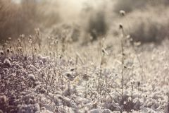 Winter background of frosty grass in sunlight Royalty Free Stock Images