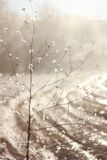 Winter background of frosty grass in sunlight Stock Photography