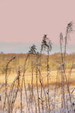 Winter background of frosty grass at the sunset Stock Photos