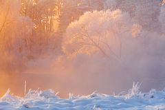 Winter background. Frosty winter morning in the forest. Trees with hoarfrost lit by bright sunlight. Bright christmas background. Winter background. Frosty royalty free stock image