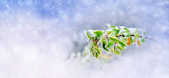 Winter background with frozen branch Stock Image