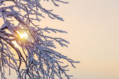 Winter background - frozen branches against sunlight Royalty Free Stock Photo