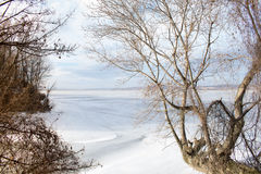 Frozen lake and trees Stock Image