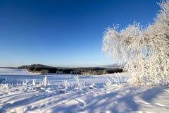 Winter Background. Frozen Landscape Stock Photo