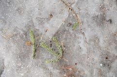 Winter background with frozen leaves and bubbles in ice. Natural phenomenon in north climate Stock Photography