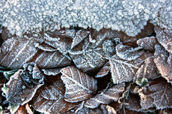 Winter background with frozen leaves Royalty Free Stock Photo