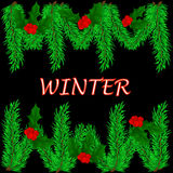 Winter background with green branches of spruce, Holly berries o. N black, winter Stock Photos