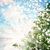 Winter Background with Green Christmas Tree and White Snow Royalty Free Stock Image