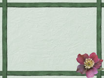 Winter background with green wooden frame and helleborus flower Royalty Free Stock Photos