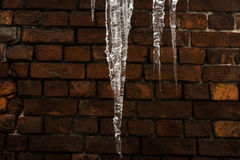 Winter background. Icicles close-up on a brick wall Stock Images