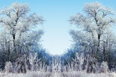Winter background with icy branches in the foreground Stock Photos