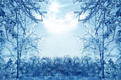 Winter background with icy branches in the foreground Royalty Free Stock Photography