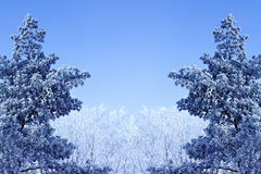 Winter background with icy branches Royalty Free Stock Images
