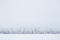 Winter background, landscape. Trees in wonderland. Royalty Free Stock Image