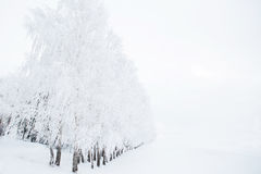 Winter background, landscape. Trees in wonderland. Royalty Free Stock Photography