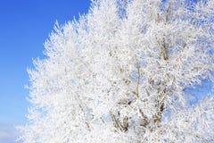 Winter background, landscape. Trees in wonderland. Stock Photos