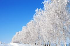 Winter background, landscape. Trees in wonderland. Royalty Free Stock Photo