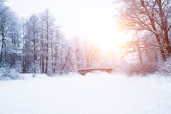 Free Winter Background, Landscape. Winter Trees In Wonderland. Winter Royalty Free Stock Photography - 70673227