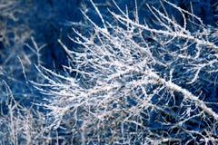 Winter background, landscape. Winter trees in wonderland. Winter Stock Photo
