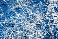 Winter background, landscape. Winter trees in wonderland. Winter Stock Photography