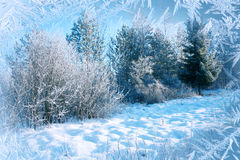 Winter background, landscape. Winter trees in wonderland. Winter Stock Photos