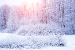Winter background, landscape. Winter trees in wonderland. Winter Royalty Free Stock Photography