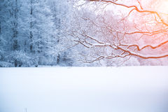 Winter background, landscape. Winter trees in wonderland. Winter Royalty Free Stock Images