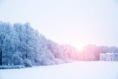 Winter background, landscape. Winter trees in wonderland. Winter Royalty Free Stock Image
