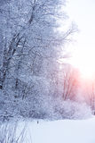 Winter background, landscape. Winter trees in wonderland. Winter Stock Images