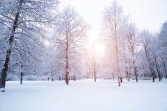 Winter background, landscape. Winter trees in wonderland. Winter Royalty Free Stock Photo