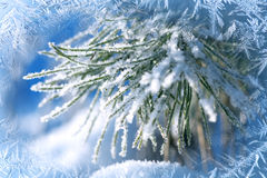 Winter background, landscape. Winter trees in wonderland. Winter. Scene. Christmas, New Year background Spruce, pine royalty free stock image