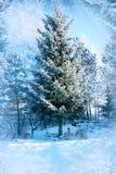Winter background, landscape. Winter trees in wonderland. Winter Stock Image