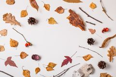 Winter background with leaves. Winter background: fallen leaves, dry plants, pinecones on white with circle space in center. Top view. Flat lay stock images