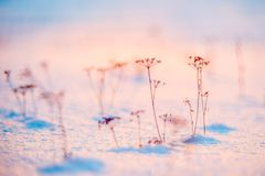 Winter background macro at sunset. Winter frost meadow plants grass at sunset time Stock Images