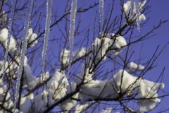 Winter background Natural icicles hanging on a white-blue background Winter background with hanging icicles against sky and tree royalty free stock photos