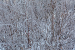 Winter background with natural white frost and ice Royalty Free Stock Photo