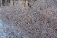 Winter background with natural white frost and ice Stock Photography