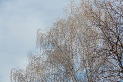 Winter background with natural white frost and ice Royalty Free Stock Photos