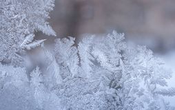 Original frosty pattern in form of leaves of whimsical plants on winter window glass. Royalty Free Stock Photography