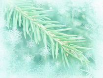 Winter background with  pine branch. Frosted fir-tree. Pine branches covered with hoarfrost. Christmas evergreen spruce tree Royalty Free Stock Image