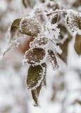 Winter background. Pine branch Stock Photos