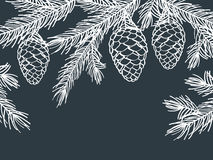 Winter background with pine branches with cones. Stock Image