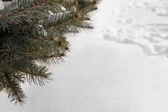 Winter background with a pine tree and snow. Winter background with the branches of an evergreen pine tree and a blanket of fresh white snow on the ground with Stock Photos