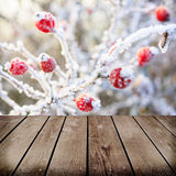 Winter background, red berries on the frozen branches Royalty Free Stock Photo