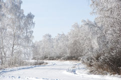 Winter background. Royalty Free Stock Photo