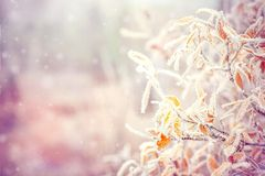 Winter Background with snow branches tree leaves