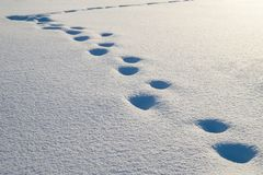 Winter Background with Snow Cover with Footprints. Winter Background with Snow Cover and Human Footprint Path royalty free stock images