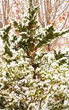 Winter Background with Snow Covered Leaves Stock Photo