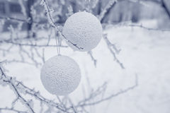 Winter background with snow-covered tree and Christmas toy Royalty Free Stock Images